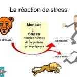 Questions et réponses sur la gestion du stress